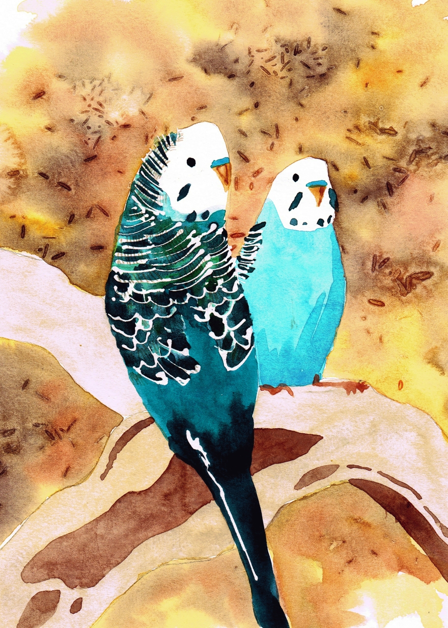 watercolour budgies