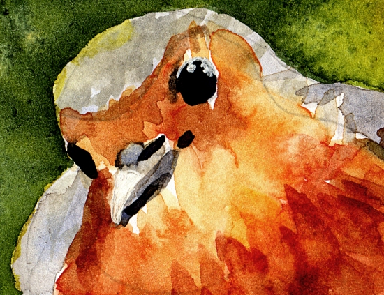 robin-watercolour-detail-2