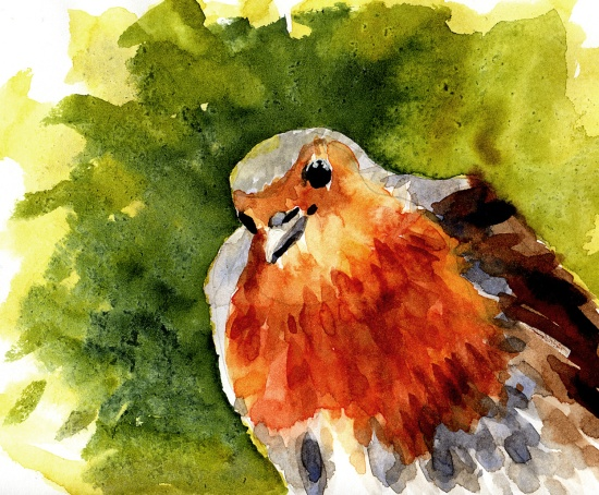 robin-watercolour