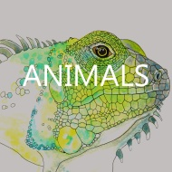 paintings & drawings where animals are the focus