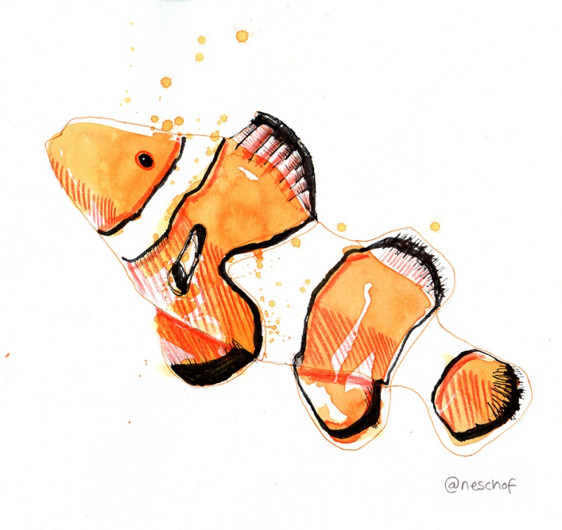 clown fish_lowres