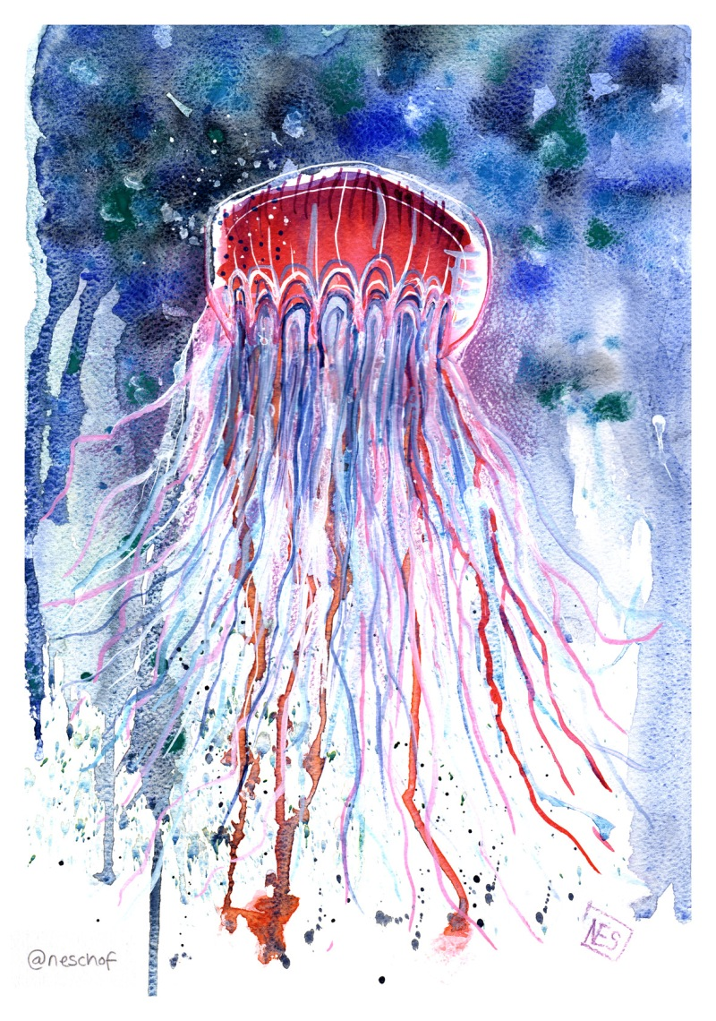 immortal_jellyfish_lowres