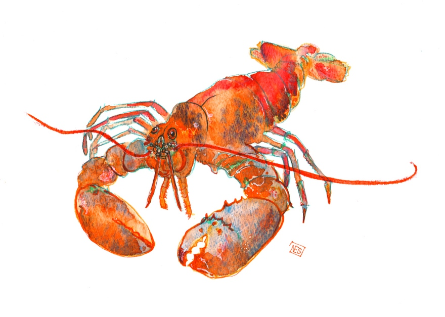 Lobster illustration in watercolour