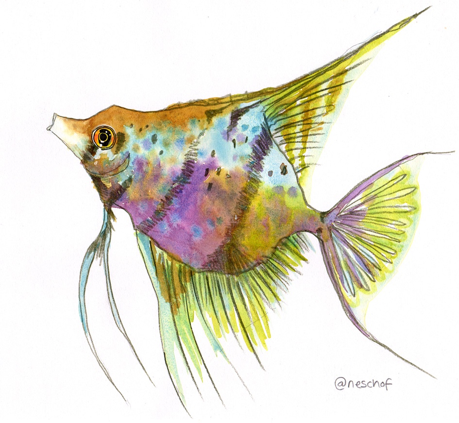 Angelfish watercolour illustration