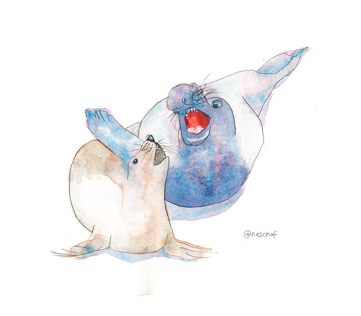 Elephant seal watercolour