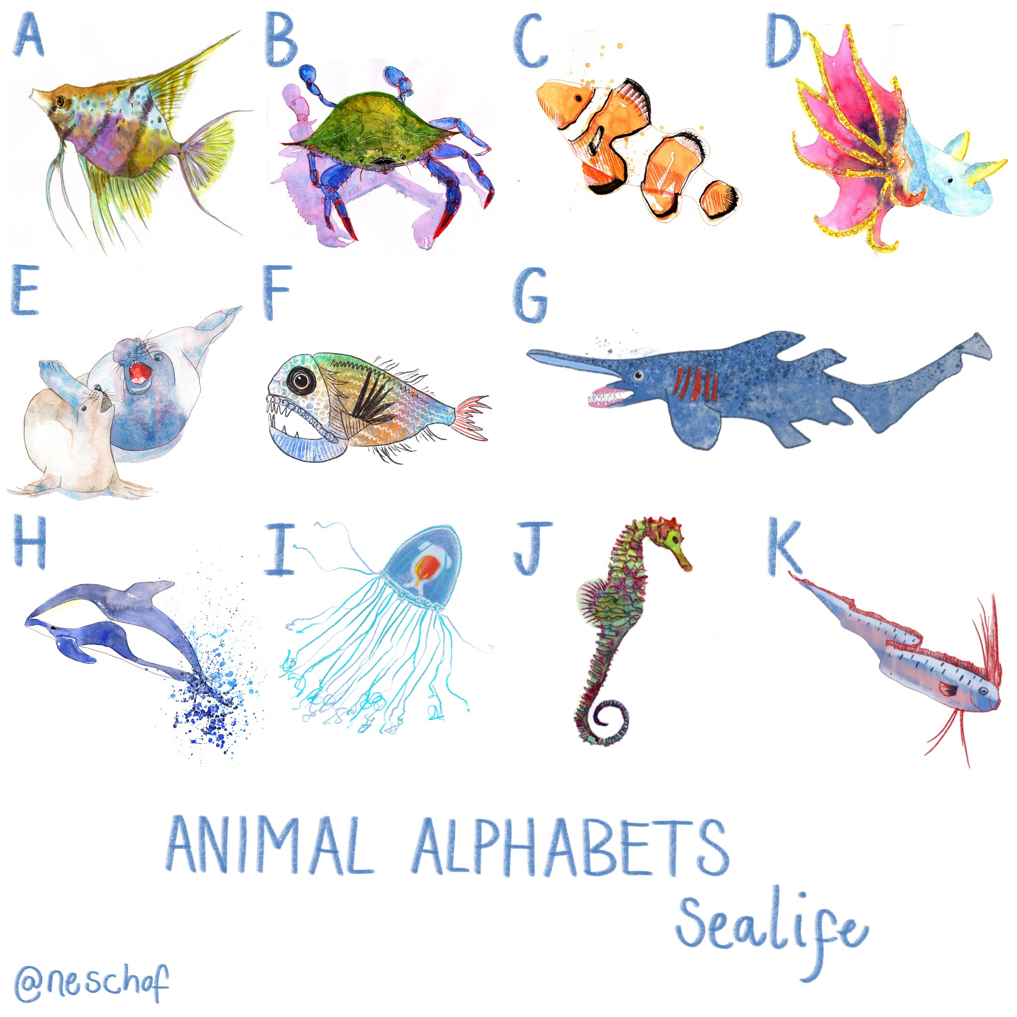 A to K animal alphabets