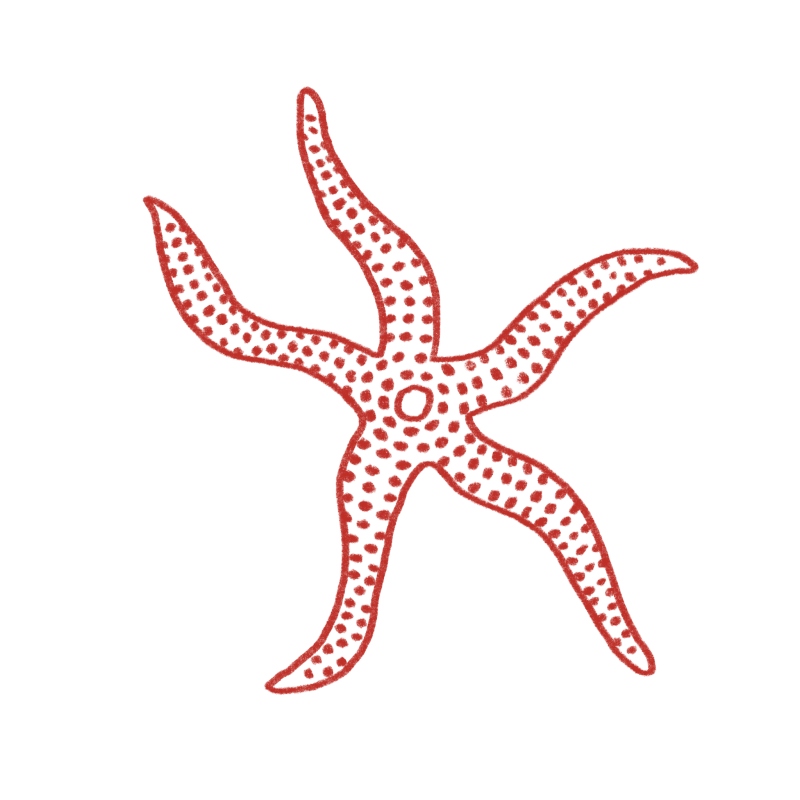 Velvety sea star