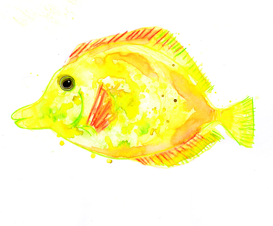 yellow tang watercolour