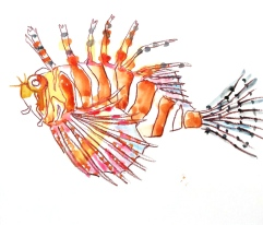 zebra lion fish watercolour WIP (4)