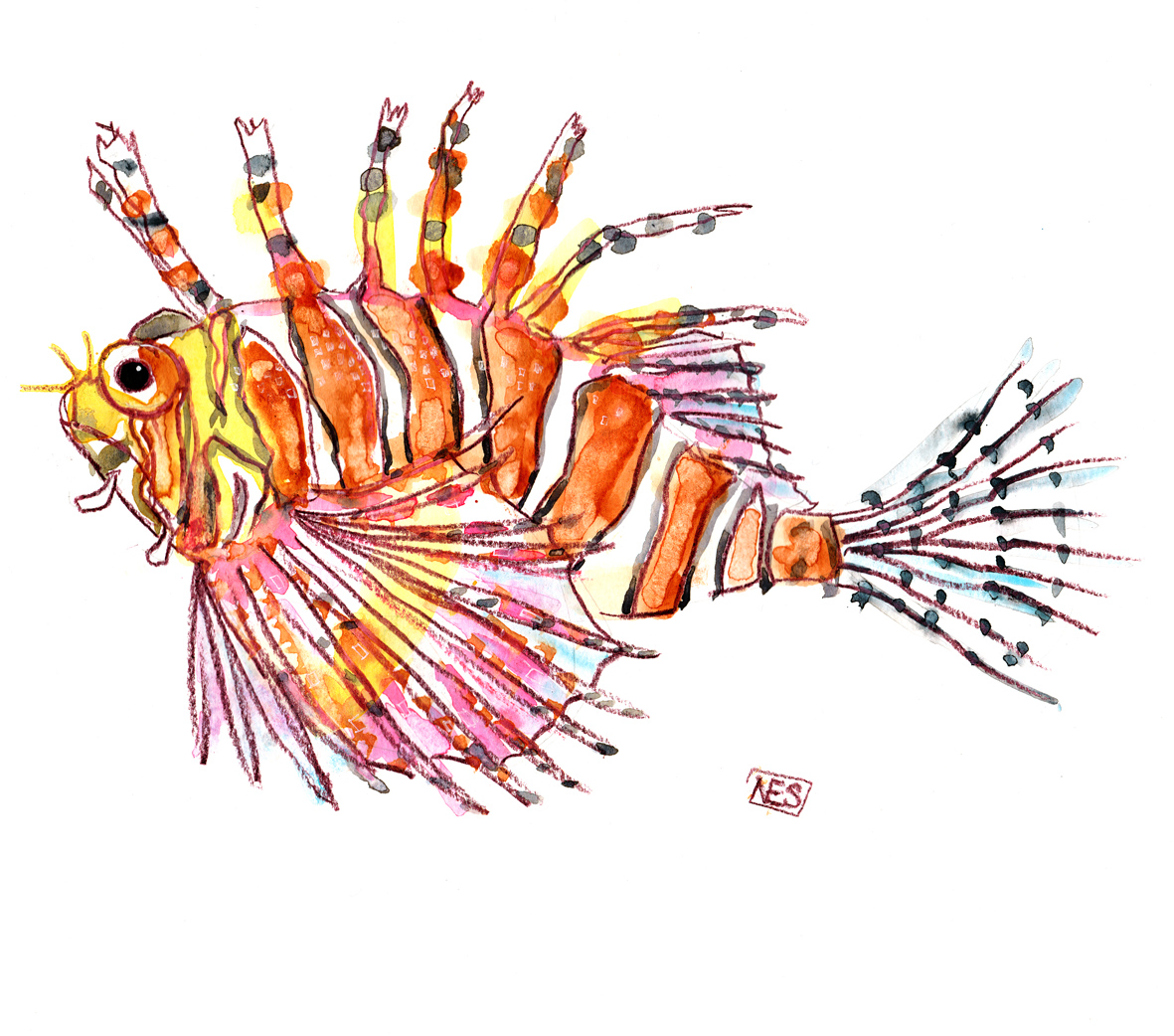 zebra lion fish final watercolour illustration